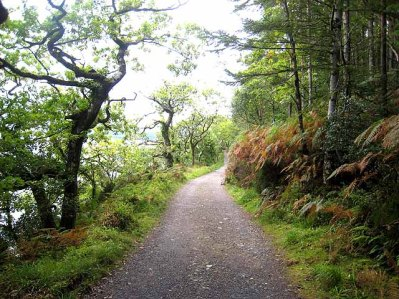 slish_wood_forest_trail_-_geograph-org-uk_-_980403